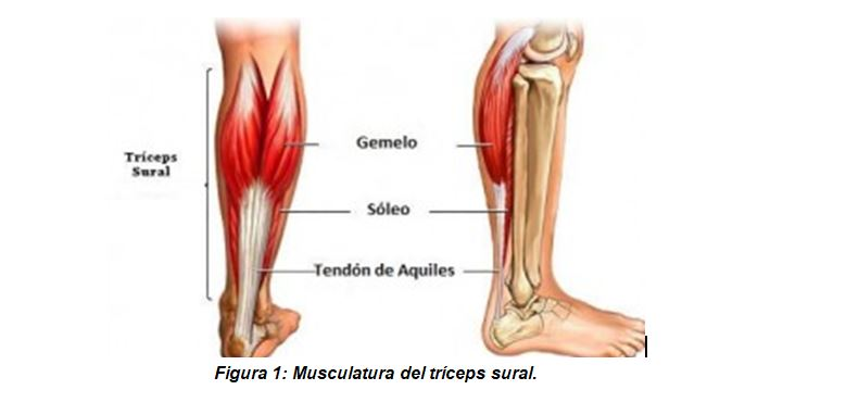 Muscle rupture of the triceps surae, prevention and treatment