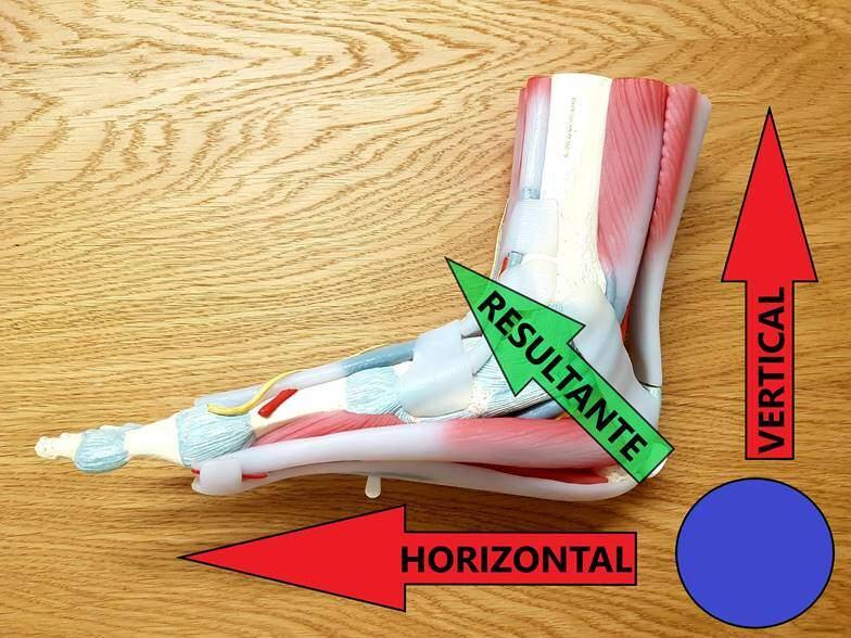 image001-8 La tendinitis de Aquiles o la fascitis plantar, la pesadilla de los corredores Artículos Fisioterapia