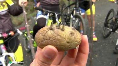 Photo of Potatoes and sticks with nails, sticks, cables at neck height, etc. The new traps for cyclists in Galicia