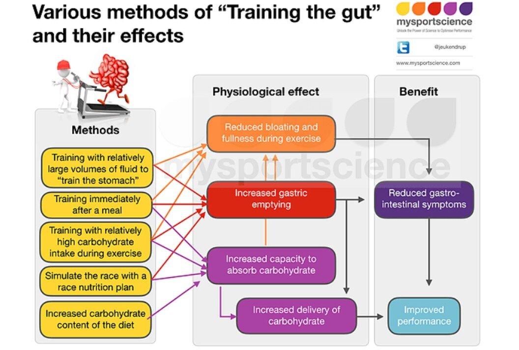 Training the gut