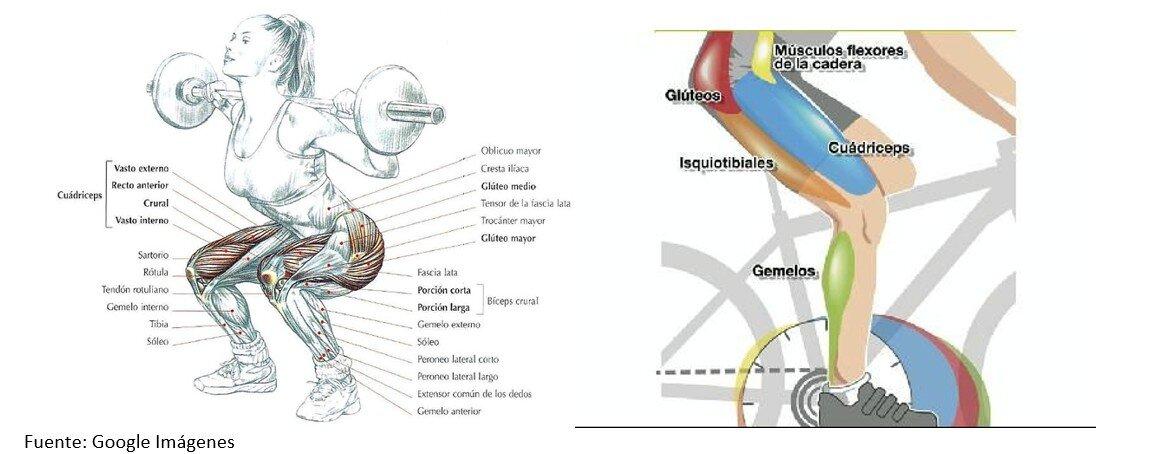 Músculos implicados en las sentadillas para ciclistas