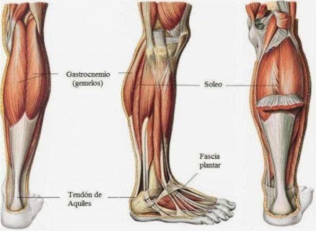 tríceps sural